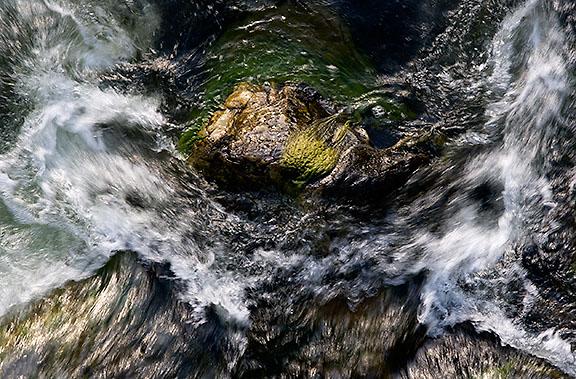 salmon-water-rock